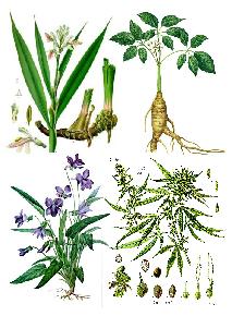 Illustration Phytothérapie